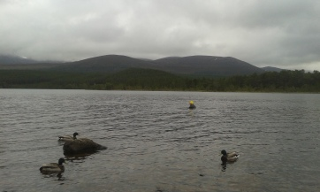 Swimming in Loch Morlich